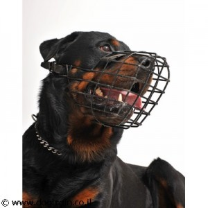 כך תרגילו את כלבכם לזמם