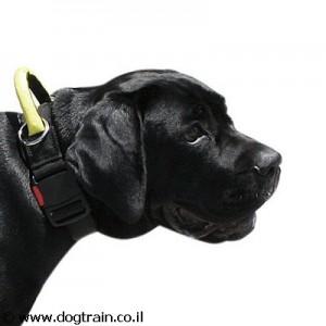 קולר ניילון לכלב עם ידית אחיזה