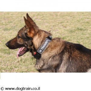NC-4829 קולר ניילון לכלב עם תפס מהיר