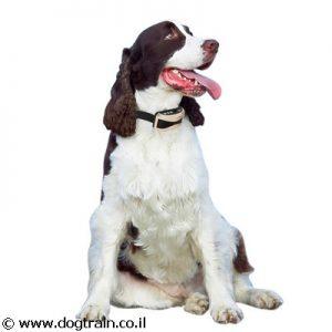 DogTrain-55-קולר רטט נטען נגד נביחות ויללות לכלבים רגישים מכל הגזעים