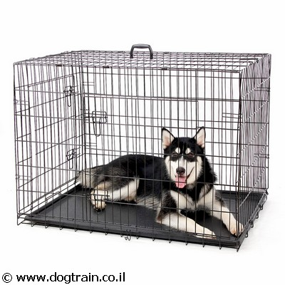 dog training cage husky inside 2 doors