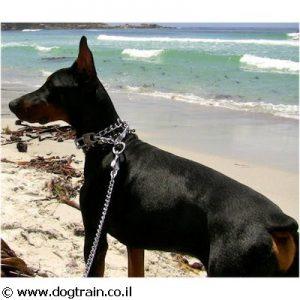 רצועה אקסקלוסיבית לכלב עם שרשרת מתכת Herm Sprenger בעלת ידית מעור