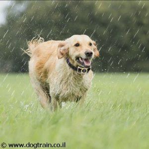 DogTrain-169A קולר חשמלי נטען נגד נביחות ויללות לכלבים בינוניים