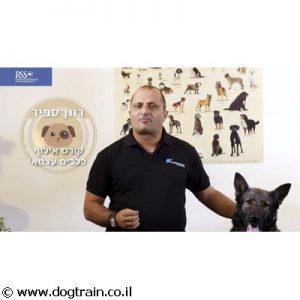 מוגן: קורס אינטרנטי עצמי מקיף לאילוף כלבים