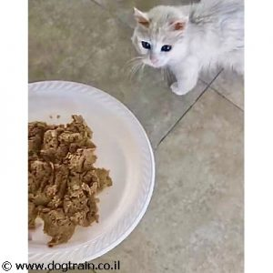 Felis Nature – פליס נייצ'ר מזון 100% טבעי לחתולים